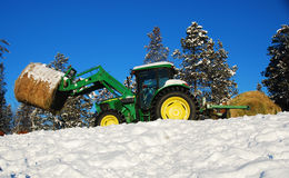 Tractor. Feeding cows in the winter stock image