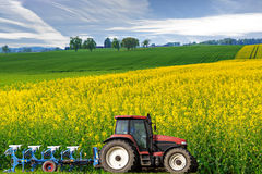 Tractor in canola field. Tractor with plough drives along beautiful sweeping blossoming bright yellow canola fields, concept for agriculture business Royalty Free Stock Photography