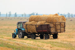 Tractor carries bales of hay on the harvested field Royalty Free Stock Photo