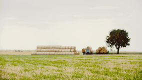 Tractor carries straw during harvest. In the summer stock footage