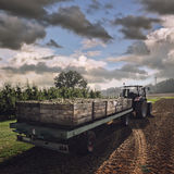 Tractor carrying wooden crates with pears Royalty Free Stock Photos
