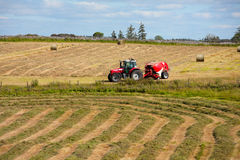 Tractor collecting haystack in the field Stock Photography