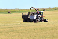 Tractor collecting silage from the field Stock Photos