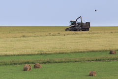 Tractor collecting silage from the field Stock Photo