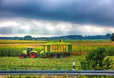 The tractor collects in the field a crop of corn. Harvest. Agricultural machinery stock images