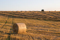 Tractor collects grass. Tractor collects dried grass in autumn Royalty Free Stock Image
