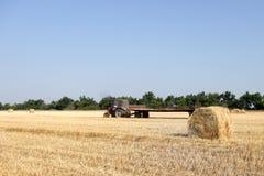 Tractor con el heno El heno que lleva del tractor Balas de heno apiladas en el carro Imágenes de archivo libres de regalías