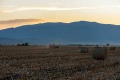 Tractor con el remolque en el trabajo en el campo de trigo de oro Imagen de archivo