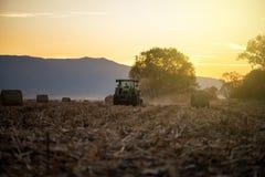 Tractor con el remolque en el trabajo en el campo de trigo de oro Fotografía de archivo libre de regalías