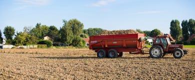 Tractor con una descarga llena de patatas fotografía de archivo libre de regalías