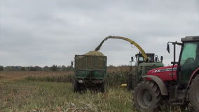 Tractor corn harvest work Stock Image