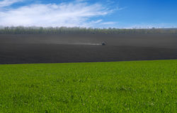 The tractor cultivates the field. Rural rural background. Panoramic view of the spring landscape on a sunny day with a field of gr. Een seedlings of winter wheat Royalty Free Stock Photo