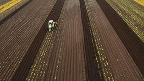 Tractor cultivates the land in the field. Aerial view Tractor Hilling Potatoes with disc hiller. Farmer in tractor preparing land with seedbed cultivator in Royalty Free Stock Images