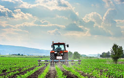 Tractor cultivating field. Stock Images