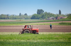 Tractor cutting lucerne Royalty Free Stock Photos