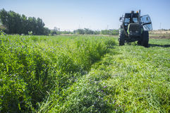 Tractor cutting and swathing alfalfa Stock Image