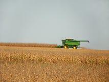 Tractor de la cosechadora que cosecha maíz maduro en campo Fotos de archivo libres de regalías