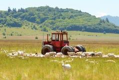 Tractor de las ovejas Imágenes de archivo libres de regalías