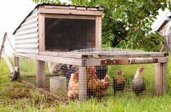 Tractor del pollo en hierba Foto de archivo libre de regalías