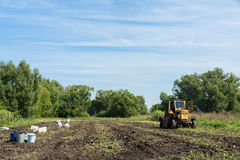 Tractor digging potatoes stock photography