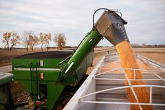 Tractor emptying its load of harvested maize. Into a waiting semi and trailer using a hopper funnel Stock Photo