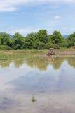 tractor en el campo del arroz, cultivo del arroz del granjero del mecanismo fotografía de archivo