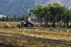 Tractor en la paleta, garcetas en el forraje Fotografía de archivo libre de regalías