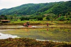 tractor en landbouwer bij padiepadieveld Royalty-vrije Stock Afbeelding