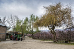 Tractor. On a farm with plantations of peaches Stock Photography