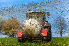 Tractor fertilizes with manure a field Royalty Free Stock Images