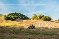 A tractor in a field. A tractor in a cornfield in the hills of the italian region of Marche Royalty Free Stock Photography