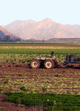 Tractor and field crops stock images