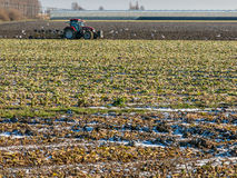 Tractor in field in Dutch polder, Holland Royalty Free Stock Images