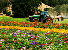 Tractor in field of flowers Royalty Free Stock Photo