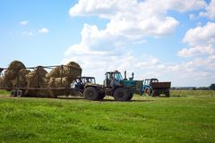 The tractor in the field harvests Stock Image