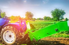 Tractor in the field with a plow for digging potatoes harvesting, seasonal work, fresh vegetables, agro-culture, farming, close-up. Good harvest on a sunny day Royalty Free Stock Photo