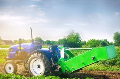 Tractor in the field with a plow for digging potatoes harvesting, seasonal work, fresh vegetables, agro-culture, farming, close-up. Good harvest on a sunny day Stock Images