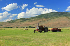 Tractor in a field. Stock Photography
