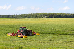Tractor on the field, surrounded by storks. Tractor mowing of fodder grasses, surrounded by storks Royalty Free Stock Image