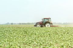 Tractor in the green field. Agriculture machine. Agriculture stock photo