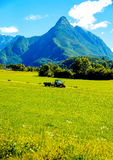 Tractor on green meadow and beautiful Alpine mountains in the background. Stock Images