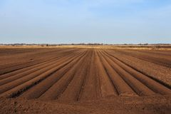 Beautiful earth. Tractor handles Latvia`s black land for planting Royalty Free Stock Photography