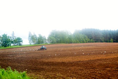 Tractor harrow at the field. Birds flying around Royalty Free Stock Image