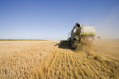 Tractor harvesting barley Royalty Free Stock Photography