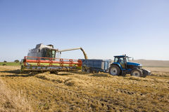 Tractor harvesting barley Stock Images