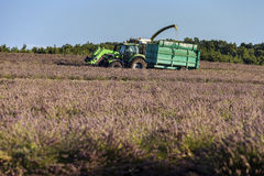 Tractor harvesting field of lavender Royalty Free Stock Image