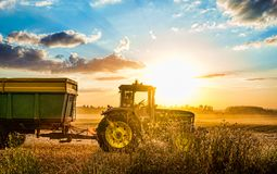Tractor harvesting grain in summer during sunset in Czech republic stock photos