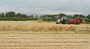 A tractor harvesting wheat Royalty Free Stock Images