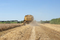 Tractor harvesting wheat Stock Image