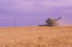 Tractor havesting wheat field royalty free stock photo